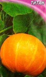 семена тыквы крупноплодной,  на кашу