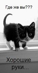 Котенок бесплатно в хорошие руки