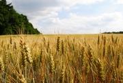 Продажа сельхозпредпиятия с налаженной инфраструктурой 4000 га.