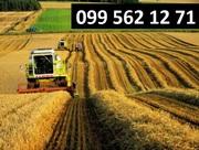 Услуги по уборке сои кукурузы зерновых рапса буряка Житомир.